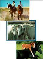 CHEVAUX / Lot De 90 Cartes Postales Modernes Neuves - Cartes Postales