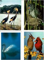 OISEAUX / Lot De 90 Cartes Postales Modernes Neuves - Cartes Postales