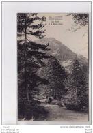 VIZZAVONA - La Forêt Et Le Monte Dore - Très Bon état - France