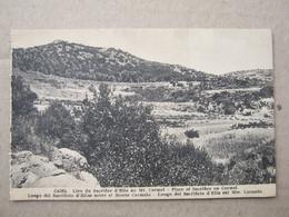 Israel / Caiffa - Place Of Sacrifice On Carmel - Israel