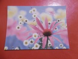 Fleurs- (carte Abimée) - Blumen