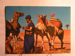 Marrakech - Prêt Pour La Promenade - Marrakech