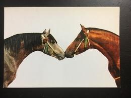 Caballos - Pferde