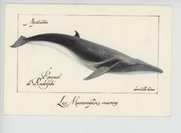 Domitille Heron Illustrateur : Rorqual De Rudolphi - Mysticètes - Mammifères Marins (cp Vierge) - Andere Zeichner