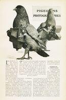 Pigeons Photographies /  Article,  Pris D`un Magazine / 1910/1911 - Boeken, Tijdschriften, Stripverhalen