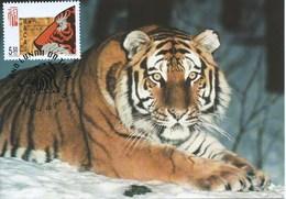 MACAU 1998 LUNAR YEAR OF THE TIGER MAXIMUN CARD, WWF CARD - 1999-... Chinese Admnistrative Region