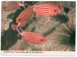JORDAN  - AQABA AND UNDERWATER LIFE IN THE RED SEA - Giordania