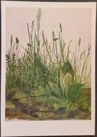 Ak Gemälde , Painting - Das Große Rasenstück - Albrecht Dürer - Aquarell - Malerei & Gemälde