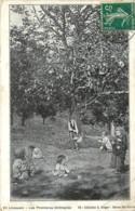 87 , En Limousin , Les Premieres Chataignes , Collection Berger N° 58 , * 437 20 - France