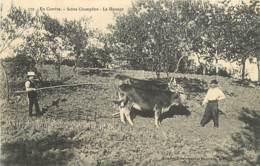 19 , En Correze , Scene Champetre , Le Hersage , * 437 90 - Non Classés
