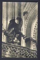 Orvieto - L'Aquila - Dettaglioi Della Facciatadel Duomo - Bird - Museum