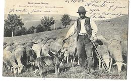 MONTAGNE NOIRE AUDE TARN BERGER ET SON TROUPEAU 1904 CPA 2 SCANS - Allevamenti