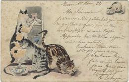 Chat   Gourmand - Katten