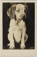 Animaux  Chien Par  Ylla - Honden