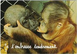 Animaux   Singe Je T'embrasse  Tendrement - Monos