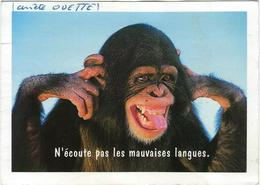 Animaux   Singe  N'ecoute Pas Les Mauvaises Langues - Monos