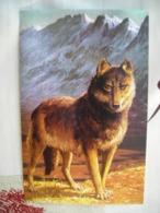 CPM (Ladybird Books) Wolf, Loup - Illustrators & Photographers