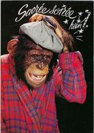 Animaux  Singe Sacre Soiree - Monos