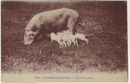 Animaux  Cochons  Les Scenes Champetres  Une Belle Famille - Cerdos