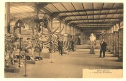 A1587[Postkaart] Musée Royal D'Histoire Naturelle Bruxelles / Salle Des Vertébrés [Brussel Museum Gewervelden] - Musées
