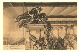 A1590[Postkaart] Musée Royal D'Histoire Naturelle Bruxelles / Tête De L'Iguanodon [musem Voor Natuurwetenschappen] - Musées