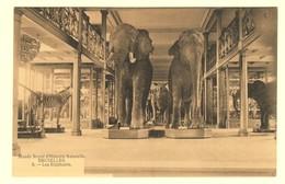 A1594[Postkaart] Musée Royal D'Histoire Naturelle Bruxelles / Les Eléphants. [olifanten Olifant éléphant Zebra Zèbre] - Musées