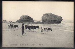 BIARRITZ 64 - La Cote Des Basques, L'Océan - Troupeau De Vaches - Biarritz