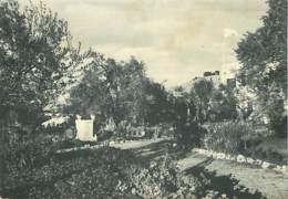 ISRAEL - Garden Of Gethsemani Jerusalem - Israel