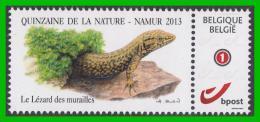 BUZIN - Lézard Des Murailles - Quinzaine De La Nature - Namur 12/10/2013 - 1985-.. Vögel (Buzin)