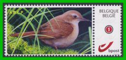 BUZIN - Rossignol Philomèle - ABCP 2013 - 1985-.. Vögel (Buzin)