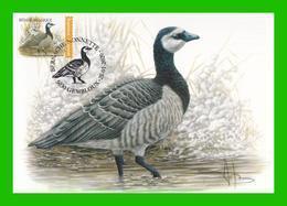 Buzin - Bernache Nonnette - CM Oblitération Gembloux 25/01/2020 - 1985-.. Birds (Buzin)
