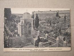 Israel / Jerusalem - Jardin De Gethsemanie, Garden Of Gethsemane - Israel
