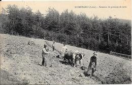 1909 - NOIRETABLE - Semence De Pommes De Terre - Noiretable