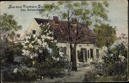 Cp Partie Aus Dem Tierheim Freyas Hain, Das Katzenhaus - Non Classés