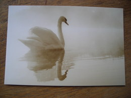 2013 CPM   Swan Cygne - Vogels