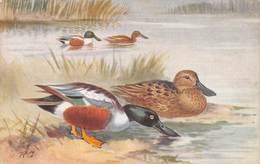 "SHOVELLER DUCKS - ARTIST SIGNED ""RG"" ~ AN OLD POSTCARD #97501 - Oiseaux"