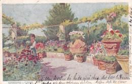 4811192Giardino A Capri. – 1905. (see Backside, See Corners) - Napoli (Naples)
