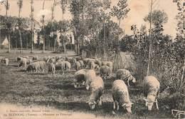 89 Bleneau Moutons Au Paturage Mouton - Bleneau