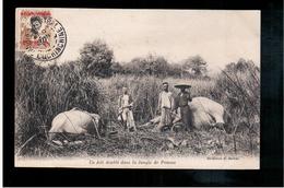 Un Joli Doublé Dans La Jungle De Penons Par Barbat Chasse éléphant Au Cambodge Hunting Cambodia  Ca 1910 Old Postcard - Cambodja