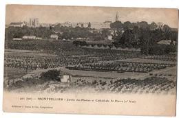 MONTPELLIER JARDIN DES PLANTES - Montpellier