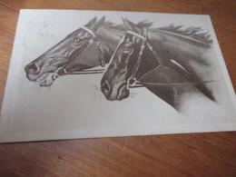Fantasiekaart Paard - Caballos