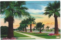 0371 - USA - TEXAS - CORPUS CHRISTI - OCEAN DRIVE - Corpus Christi