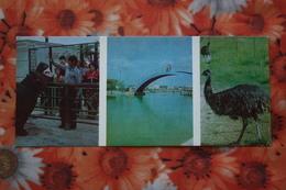 USSR, KAZAKHSTAN. CHIMKENT Zoo. Hippo. OLD Postcard. 1977 - Ippopotami