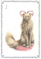 Chat Alphabet Lettre J Illustration Illustrateur Armelle Boy - Katten