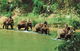 Thailande Thailand Elephant Four Elephants With Mahouts   + Timbre 2 Timbres - Thaïlande
