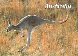 Austarlie Kangourou Australian Kangaroo + Timbre - Australie