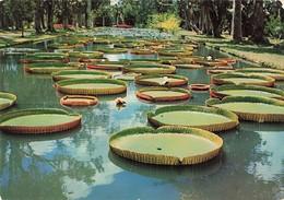 Ile Maurice Mauritius Jardin Botanique Pamplemousses Nenuphar + Timbre - Mauritius