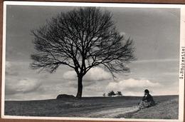 """Magnifique Carte Photo Originale Allemagne 1943 - Femme Au Pied D'un Arbre (S. Rückseite !) & Chant """" Vagabundenlied """" - Lieux"""