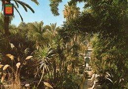 Marrakech - Jardin Majorelle - Marrakech