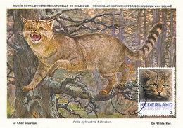 D38931 CARTE MAXIMUM CARD 2013 NETHERLANDS - CHAT SAUVAGE WILD CAT CP MUSEUM ORIGINAL - Roofkatten